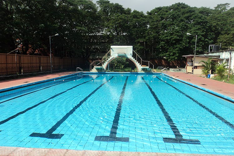 Youngsters, Job And Swimming Pool Service Provider